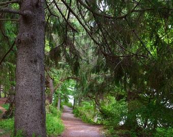 Mackworth Island Falmouth Maine Walking Path Print + Mat