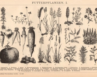 Antique Vegetable Lithograph from 1890, Food, Food Prints, Food Lithographs, Food Wall Art, Fruit, Fruit Prints, Fruit Lithographs