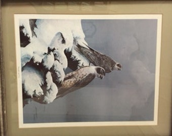 Bill Jaxon Framed Print