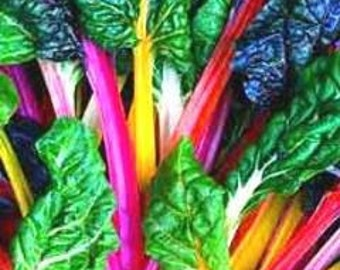 Swiss Chard 'Bright Lights 100 Seeds, Beet Leaf