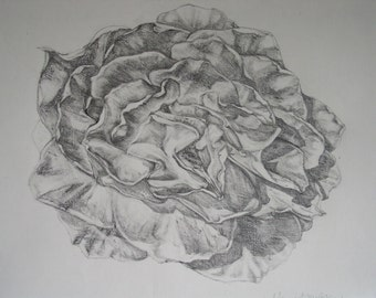 Giclee Print, Rose is Rose