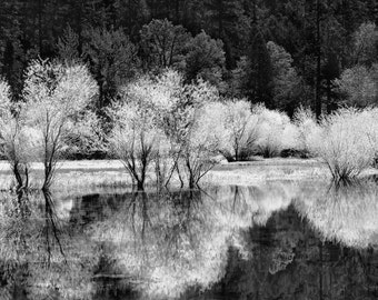 Mirror Lake, Yosemite, trees, reflections, California, black and white, wall art, photography landscape