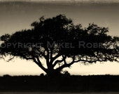 Sunset. Sunrise. Tree of Life. Black and White. Original Digital Art Photograph. Wall Decor. Giclee Print SUNSET SUNRISE by Mikel Robinson