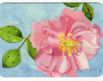 Pink Rose - greeting card 5x7 with envelope Print of Original Watercolor