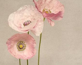 Flower Photography, Flower Wall Art, Poppy Art, Poppy Print, Pink Flowers, Girls Room Art, Fine Art Photography Print