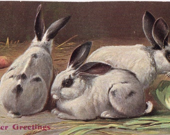 Vintage Easter Rabbits Postcard circa 1905