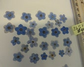 Choose your Alaskan Grown and Pressed Forget me not Flowers  365 FL