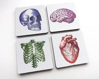 Medical Gift for Nurse Doctor anatomy drink coasters dorm room decor student anatomical heart physician assistant practitioner mug mat nerd