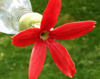 Hummingbird Feeder--Royal Catchfly on Square Bottle