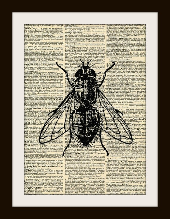 Art Print FLY 8x10 Dictionary Gold Gulided Vintage Page