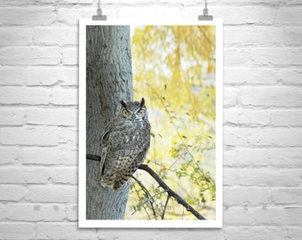 Owl Wall Art, Owl Print, Bird Photo, Owl Photograph, Avian Art,  Great Horned Owl, Autumn Art, Wildlife Photography, Fall Colors