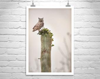 Owl Photography, Owl Print, Great Horned Owl, Cactus Picture, Wildlife Art, Framed Print, Bird Art, Tucson Arizona, Owl Art, Canvas Picture