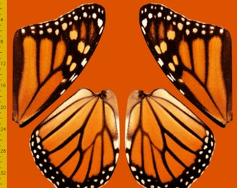 Orange Monarch Butterfly Fabric to Make Costume Wings - 100% Cotton Woven, 2 Yards