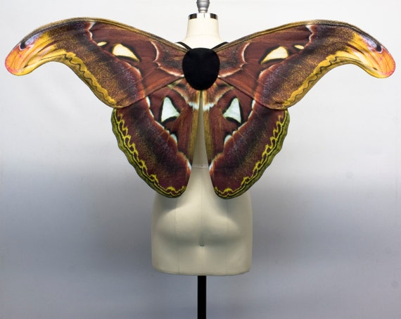 Atlas Moth Wings from Crafty Anne's Artistry