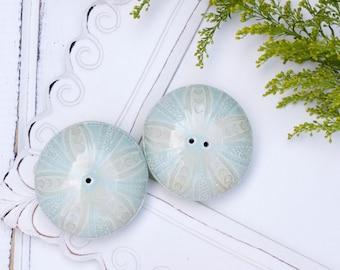 pale blue Porcelain Sea Urchin Salt & Pepper Shakers