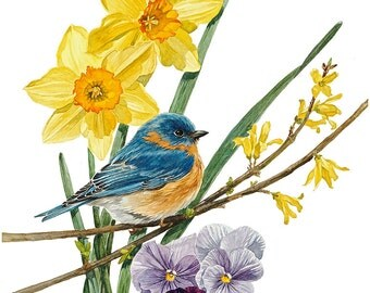 "Watercolor Giclee print of ""Spring Bluebird"" Bird and Flower Botanical in Spring by Cindy Day"