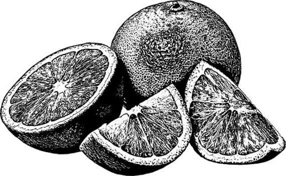 oranges fruit printable black and white art Digital image download food clipart gardening printables graphics digital stamp digi stamp