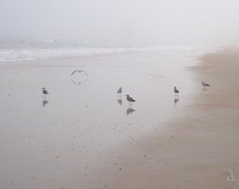 Sea Birds and Sand - Photo ART Print