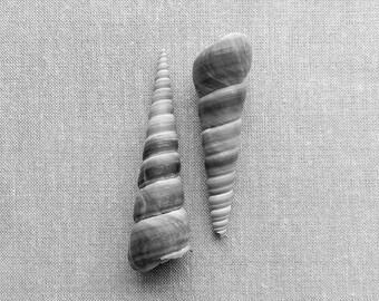 Seashell Print, Modern Beach Decor, Horn Shells Black and White Photography,Still Life Print,Seashell Photography,Black & White Print Square