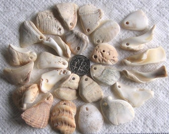 25 Sea Shell Fragments and Core Pendants Top Drilled 2mm holes Supplies (1754)