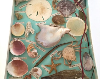 Box of Vintage Seashells Crabs Sea Life Specimens Florida Souvenir Shells
