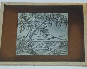 Vintage Magic Lantern Slide of Barnacle Tree by Sebastian Munster Cosmographia from 1544