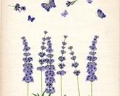 ON SALE Flower clip art, vintage lavender, botanical flowers,butterfly clip art, purple flowers, card making, border , INSTANT Download