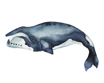 Bowhead Whale Watercolour 11x14 Print