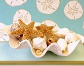 Beach Decor -Giga Scalloped Clam Shell with Seashells and Starfish, Glass Pebbles or Sand - coastal decor shells sea shells sea shell