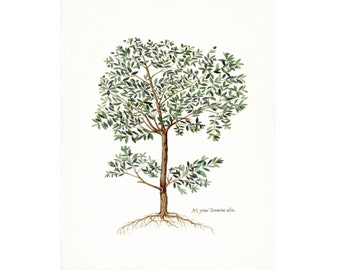 Vintage Italian Olive Tree Botanical Natural History Wall Decor Print