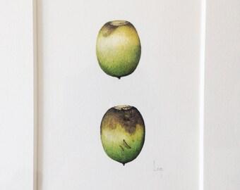 Original Botanical Watercolor on Paper of two acorns