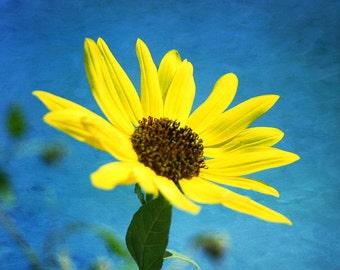 Sunflower photo, flower photo, nature photography, flower photography, home decor