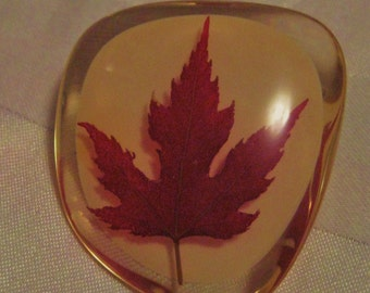 vintage lucite brooch with real maple leaf-made in Canada-sale