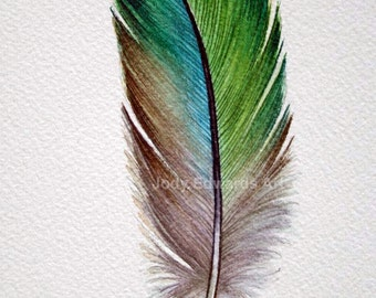 Parrotlet Feather study - Original Watercolour painting