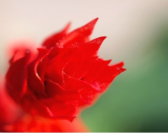 Red flower, Passion, greeting card, flower photograph, art card, blank card, write your own message