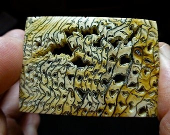 Hells Canyon petrified wood