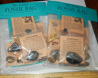 Fossil Kit- group of 10 fossils