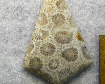 Agatized Fossil Coral (AGT2513)