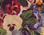 Victorian Gift-wrapping Paper Vintage Pansies purple pansy