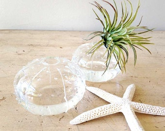 Sea urchin vase, small bud vase, FS31471, flower vase, clear glass vase, coastal decor, beach decor, nautical decor, small vase