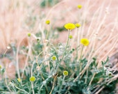 "5x5"" Square 35mm Film Print - Joshua Tree, CA Desert Blooms"