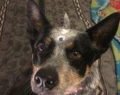 test listing - third eye puppy photo