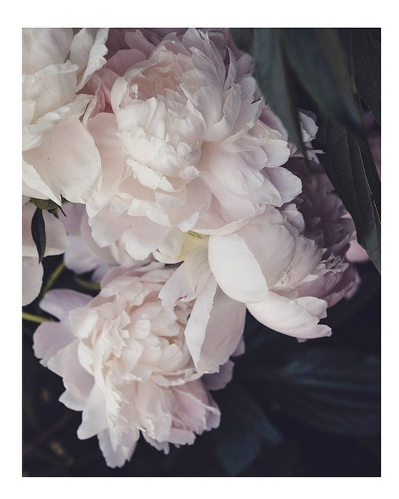 Peony, Still Life Print, Nature, Flower Art, Pink Peonies Print, Nursery Decor, Pastel Art, Girls Room Photography, Botanical Photo