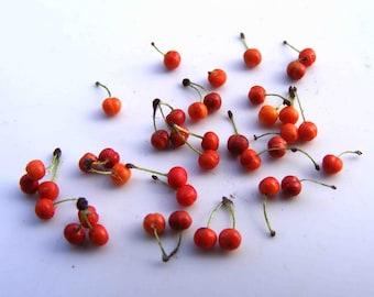Loose early cherries (40 stems)