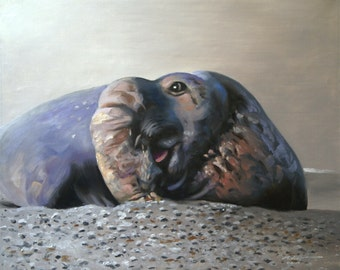 Elephant Seal 11 x 17 print (image 10.5 x 13) personally signed by artist RUSTY RUST / S-68-P