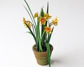 Narcissus (daffodils) in a mossy weathered pot for the 1/12th, one inch scale dolls' house