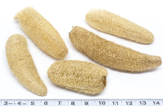 Whole Loofahs - 10 Qty - Crafting - Parrot Toys & Bird Toy Parts by A Bird Toy