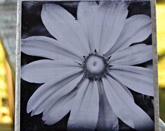 Black and White Daisy Coaster