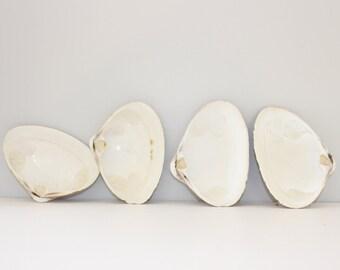 Clam Shells Fossils