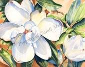 "Watercolor Print ""Magnolia"" by Sandi McGuire"